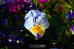 Late Spring Blooms- Unwrapping The Gift Of Nature