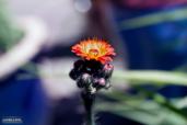 Mid Summer´s Bloom 8