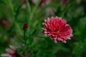 Mid Summer´s Bloom 3