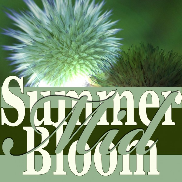 Mid Summer Bloom: Unwraping The Gift Of Nature